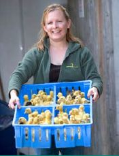 Tanya - ducks